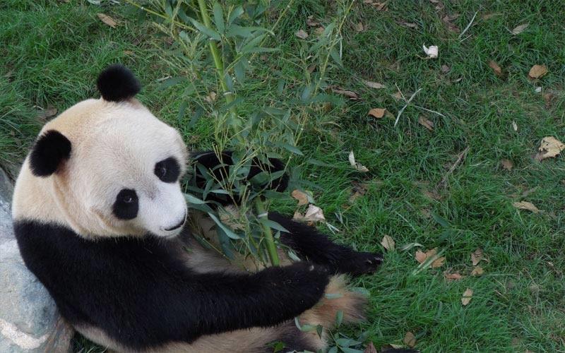济南动物园团队票
