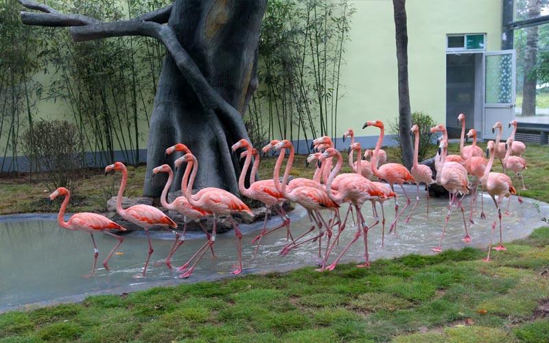 【景点简介】济南动物园原名金牛公园,后称金牛动物园,始建于1959年10月,1960年5月1日开放,1989年9月8日改称济南动物园;济南动物园位于济南市北部,现有各类动物200多种,2000余只。济南动物园是我国大型动物园之一,建园40多年来,得到了社会各界朋友的大力支持,现已是一个规模庞大,集动物饲养、观赏、科研、娱乐、餐饮服务为一体的综合性动物园。1995年被国家建设部命名为全国十佳动物园。【景点特色】济南动物园经过全体职工40多年的艰苦奋斗,在对动物知识的科普、动物的保护及动 物科研繁殖等方面取