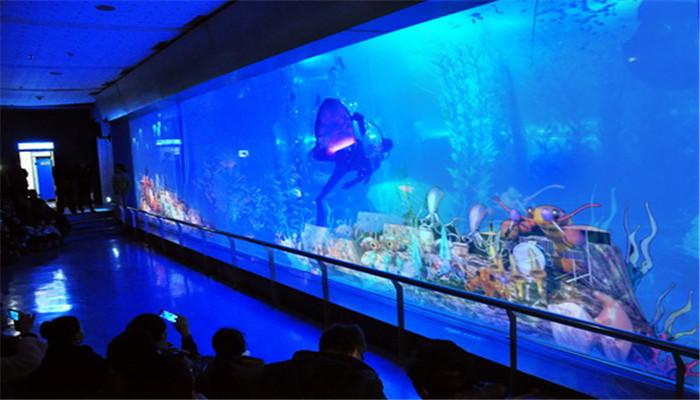 【青岛海底世界[官方电子票]半价票【淡季】团购】[票